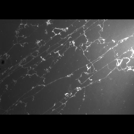 NCBI Organism:Gallus gallus; Cell Types:erythrocyte Cell Components:nuclear chromatin