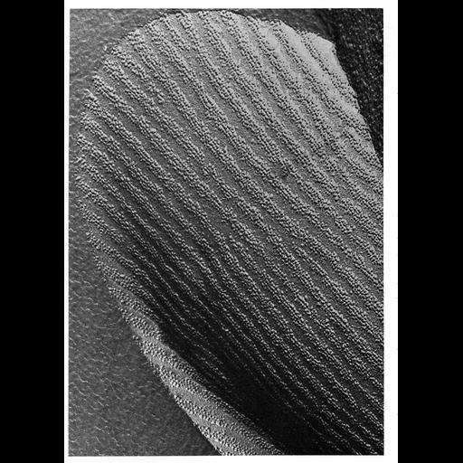 NCBI Organism:Didelphinae; Cell Types:sperm Cell Components:plasma membrane, integral to plasma membrane; Biological process:fertilization, plasma membrane organization;