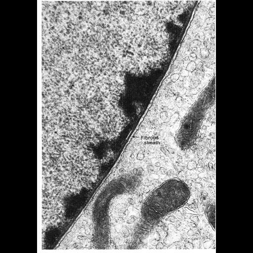 NCBI Organism:Amphiuma tridactylum; Cell Types:epithelial cell, intestinal epithelial cell; Cell Components:nuclear envelope, nuclear lamina, chromatin, heterochromatin; Biological process:nucleus organization, nuclear transport, chromatin organization;