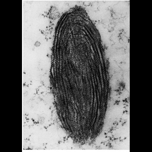 NCBI Organism:Homo sapiens; Cell Components:melanosome Biological process:pigmentation