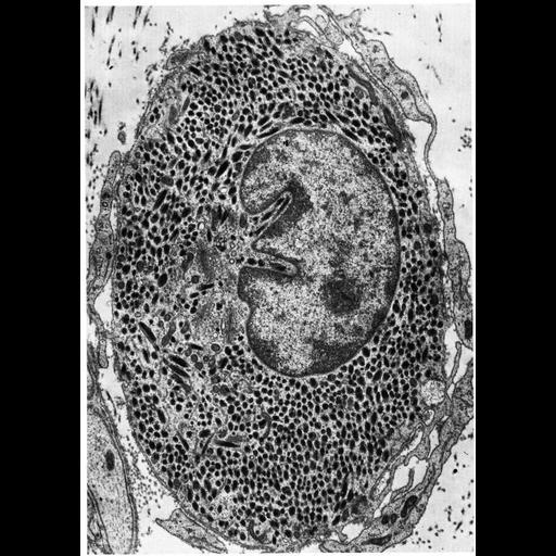 NCBI Organism:Macaca mulatta; Cell Types:melanocyte Cell Components:melanosome Biological process:pigmentation