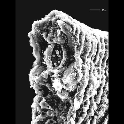 NCBI Organism:Danio rerio; Biological process:notochord development
