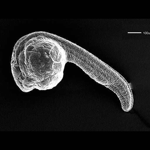 NCBI Organism:Danio rerio; Biological process:embryo development