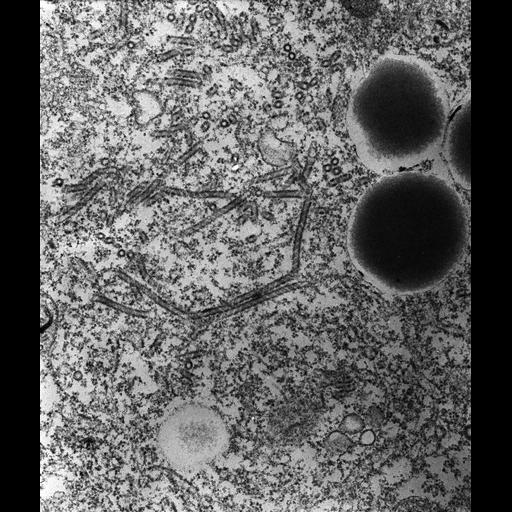 NCBI Organism:Paramecium multimicronucleatum; Cell Types:cell by organism, eukaryotic cell, , ; Cell Components:contractile vacuolar membrane, integral to contractile vacuolar membrane, intrinsic to contractile vacuolar membrane; Biological process:contractile vacuole organization, contractile vacuole discharge;