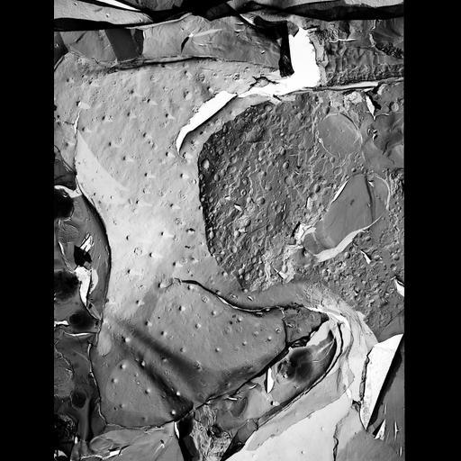 NCBI Organism:Micrasterias denticulata; Cell Components:rough endoplasmic reticulum, smooth endoplasmic reticulum, Golgi apparatus, vesicle, plasma membrane; Biological process:Golgi organization, endoplasmic reticulum organization, vesicle organization, plasma membrane organization;