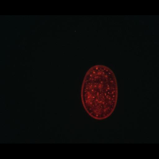 NCBI Organism:Caenorhabditis elegans; Biological process:autophagy