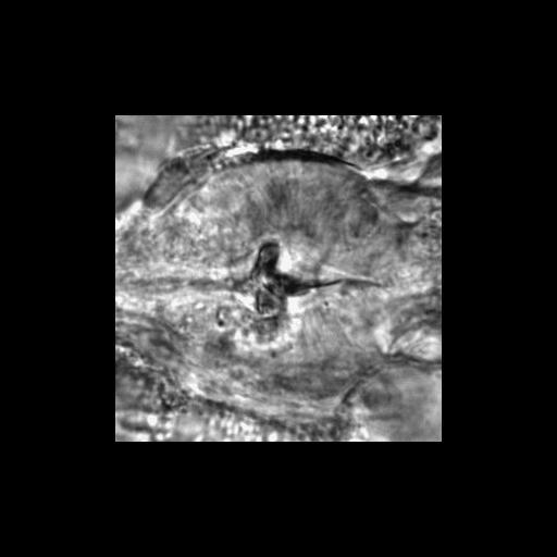 NCBI Organism:Caenorhabditis elegans; Biological process:chronological cell aging