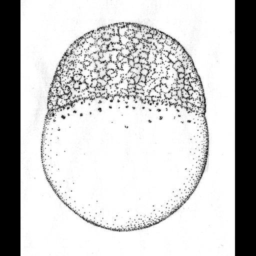 NCBI Organism:Danio rerio; Cell Components:cell Biological process:embryo development