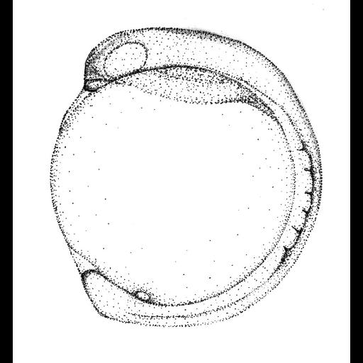 NCBI Organism:Danio rerio; Biological process:embryo development
