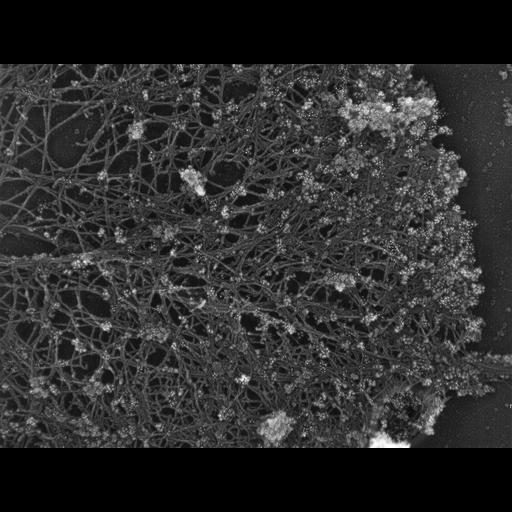 NCBI Organism:Xenopus laevis; Cell Types:fibroblast Cell Components:lamellipodium, actin cytoskeleton, ; Biological process:actin filament-based process