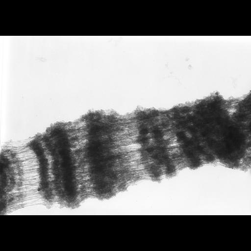 NCBI Organism:Drosophila melanogaster; Cell Types:fat body cell Cell Components:polytene chromosome Biological process:chromosome organization