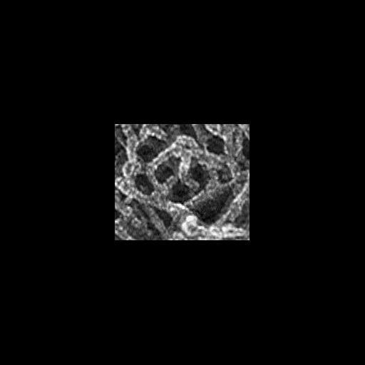 NCBI Organism:Xenopus laevis; Cell Components:actin cytoskeleton