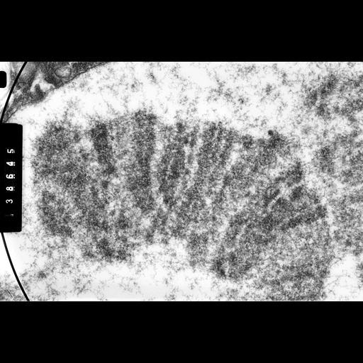 NCBI Organism:Drosophila melanogaster; Cell Components:polytene chromosome Biological process:chromosome organization