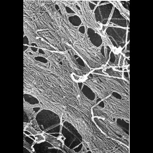 NCBI Organism:Mus musculus; Cell Types:fibroblast Cell Components:actin cytoskeleton, stress fiber; Biological process:actin cytoskeleton organization