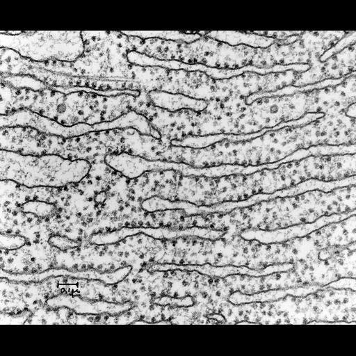 NCBI Organism:Cavia porcellus; Cell Components:rough endoplasmic reticulum, rough endoplasmic reticulum membrane, ribosome, rough endoplasmic reticulum lumen;