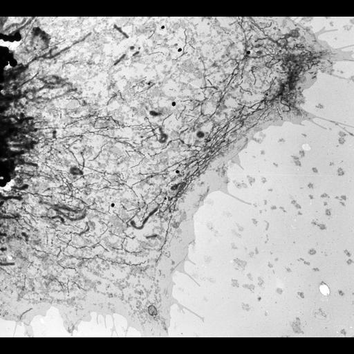 NCBI Organism:Gallus gallus; Cell Types:fibroblast, ; Cell Components:endoplasmic reticulum