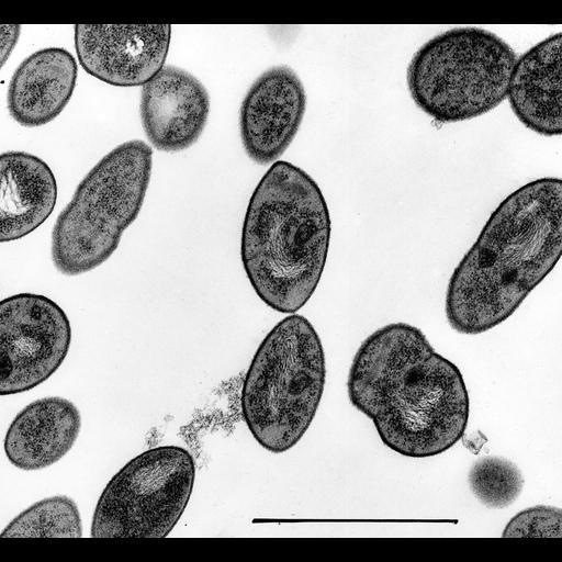 NCBI Organism:Streptococcus pneumoniae;