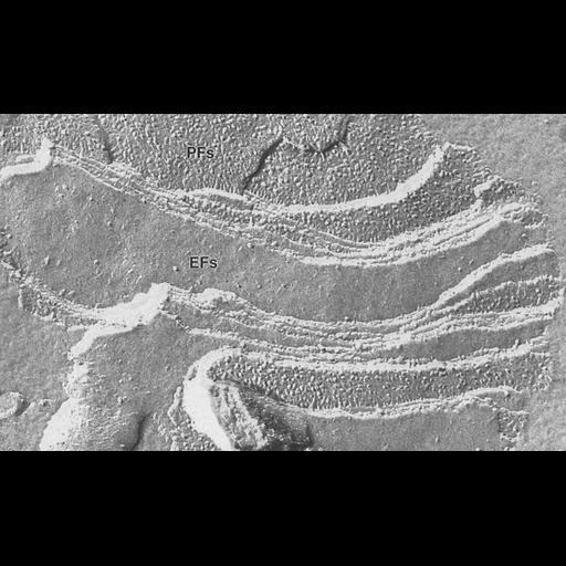 NCBI Organism:Triticum sp.; Cell Components:chloroplast, plastid thylakoid membrane; Biological process:photosynthesis, organelle organization;