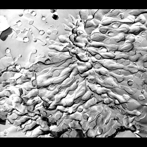 NCBI Organism:Paramecium multimicronucleatum; Cell Types:cell by organism, eukaryotic cell, , ; Cell Components:pellicle, plasma membrane, trichocyst; Biological process:plasma membrane organization