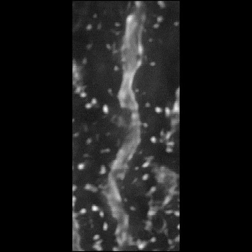 NCBI Organism:Rattus norvegicus; Cell Types:CNS neuron (sensu Vertebrata), Purkinje cell; Cell Components:dendritic spine, dendrite;