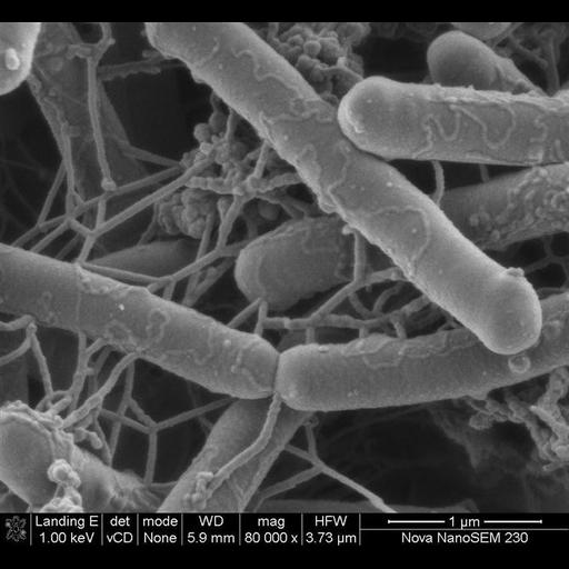 NCBI Organism:Salmonella; Cell Components:cell surface Biological process:induction of bacterial agglutination