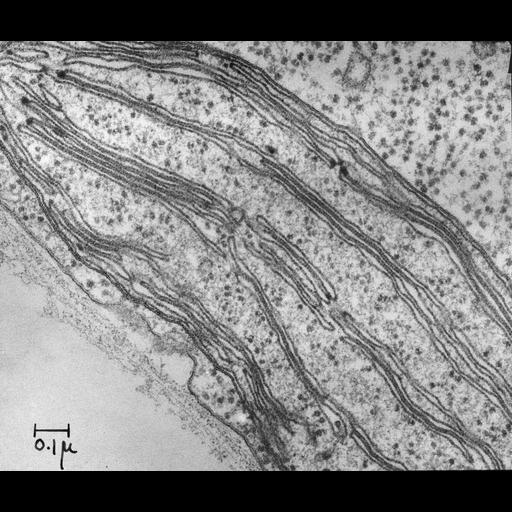 NCBI Organism:Chlamydomonas reinhardtii; Cell Components:chloroplast, plastid thylakoid, chloroplast ribosome; Biological process:photosynthesis, plastid organization, chloroplast organization;
