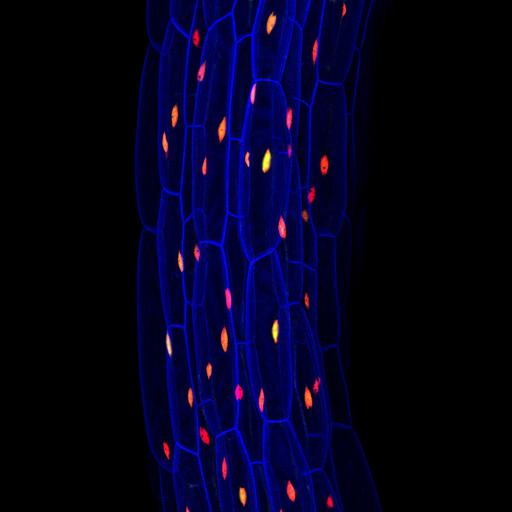 NCBI Organism:Arabidopsis thaliana; Cell Components:cell wall