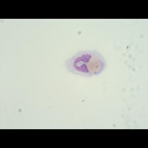 NCBI Organism:Homo sapiens, ; Cell Types:monocyte, erythrocyte; Cell Components:; Biological process:;