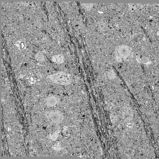 NCBI Organism:Mus musculus, ; Cell Types:, , ;