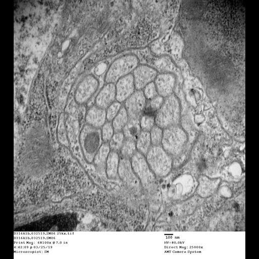 NCBI Organism:Drosophila melanogaster, , ;