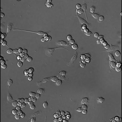 NCBI Organism:Mus musculus, ; Cell Types:; Cell Components:; Biological process:;