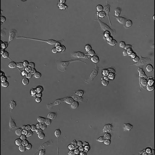 NCBI Organism:Homo sapiens, ; Biological process:;