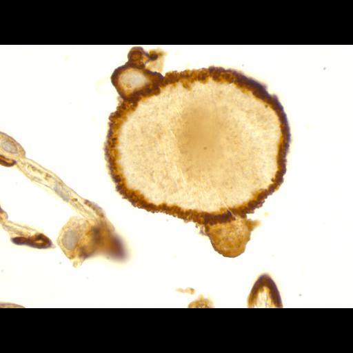 NCBI Organism:Homo sapiens, , ; Cell Types:; Cell Components:, ;