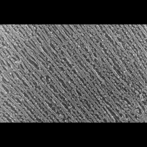 NCBI Organism:Oryctolagus cuniculus; Cell Types:skeletal muscle cell Cell Components:cytoskeleton Biological process:skeletal muscle contraction